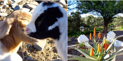 Collage of farm activities