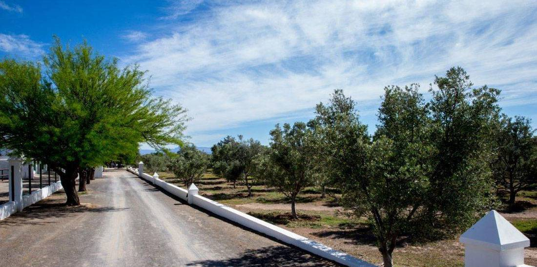 Entrance road to Olive Grove Guest Farm™